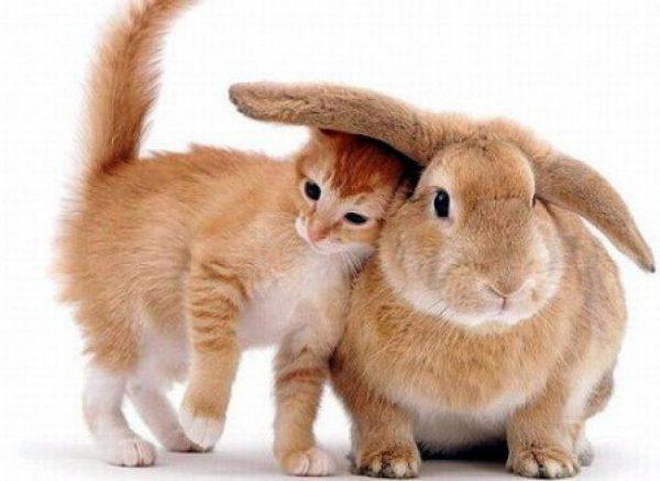Colchones KM0. Que no te den conejo por liebre